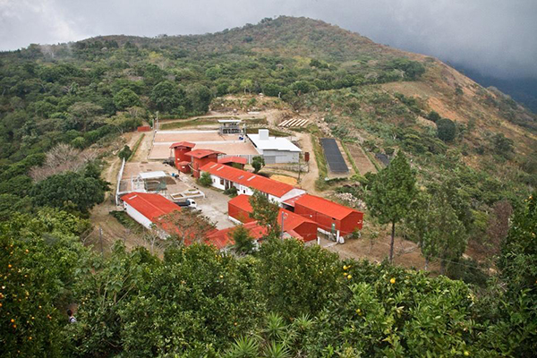 エルサルバドル 農園