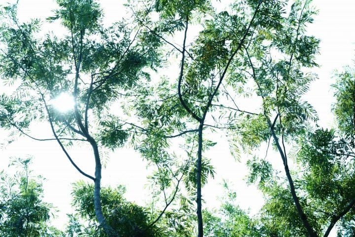シェードツリー