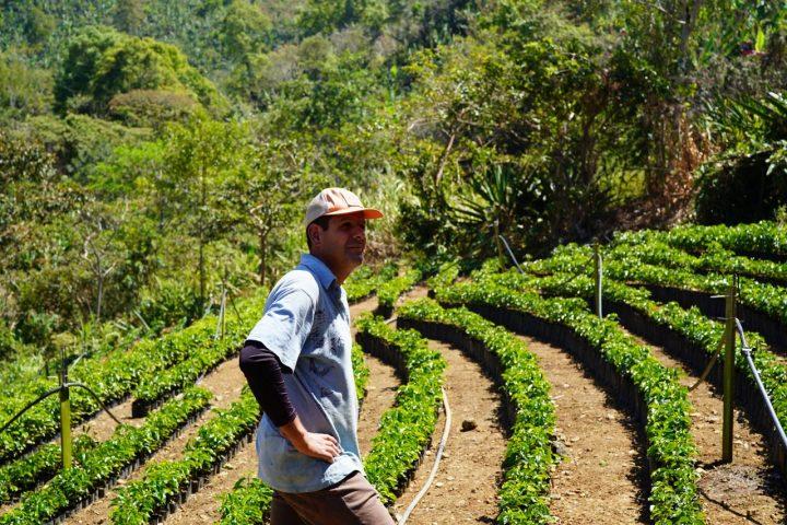 スペシャルティコーヒー 農園