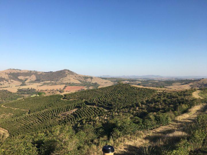 ブラジル コーヒー農園