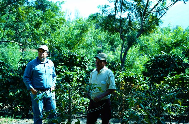カンデラリア農園 ルイス・ペドロ・セラヤさん