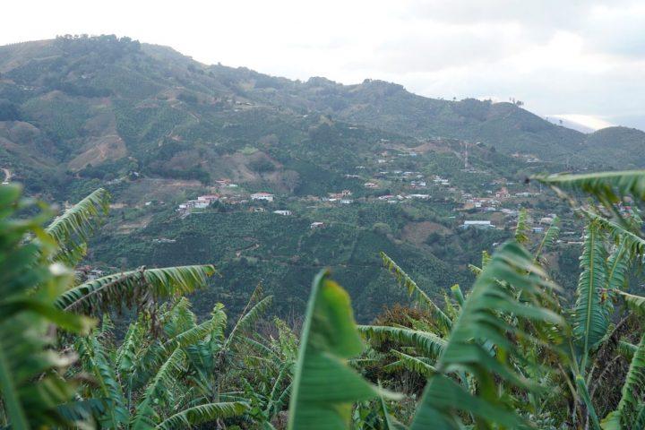 サンマルティン農園から見える景色