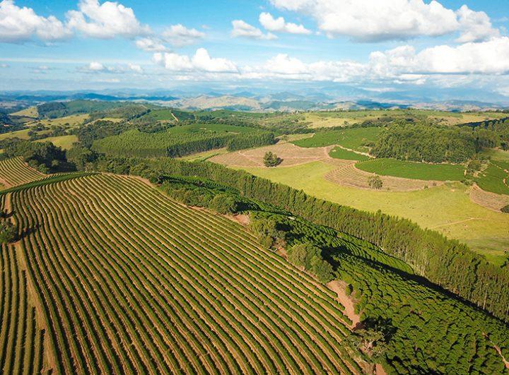ブラジル サントゥアリオスル農園