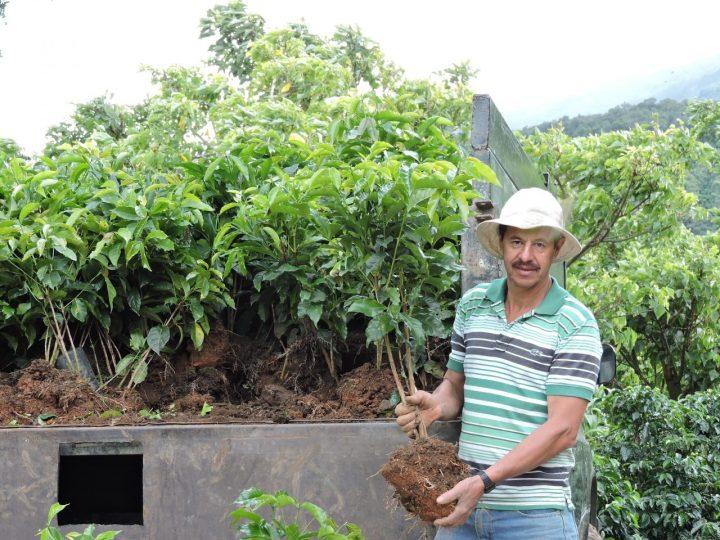 コスタリカ カップオブエクセレンス エルパライソ農園