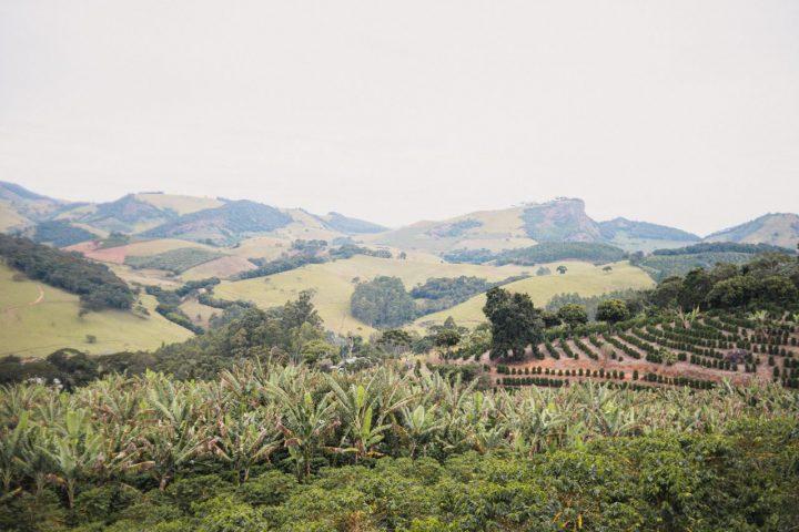 シッチョ・ダ・ペドゥラ農園