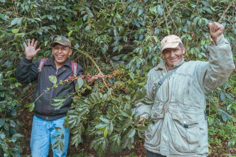 ボリビア アグアリカ農園