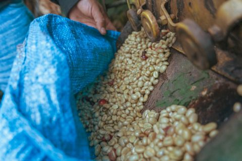 パルピング後の生豆